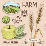 Objetos de la granja Imagen de archivo libre de regalías