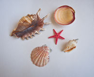Objetos de la playa. Imagen de archivo libre de regalías