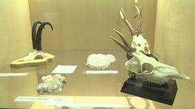 Objetos expuestos de animales salvajes almacen de video