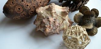 Objetos naturales Fotografía de archivo libre de regalías