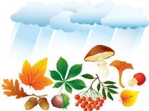 Objetos naturales del otoño Imágenes de archivo libres de regalías