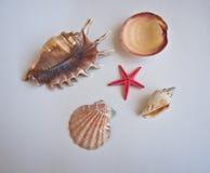 Objets de plage. Image libre de droits
