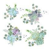 Objets succulents colorés verts de conception de vecteur d'Echeveria illustration de vecteur