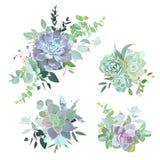 Objets succulents colorés verts de conception de vecteur de bouquets illustration de vecteur
