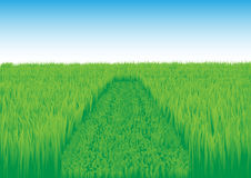 Oblique_grass_field Fotos de Stock Royalty Free