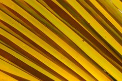 Oblique pattern of dried coconut leaf. For Background or wallpaper. stock photography
