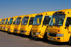 An oblique perspective of 8 yellow Arabic school busses Stock Photo