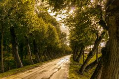 Oblique road of trees. North Germany Bramsche - rainy day Royalty Free Stock Photo
