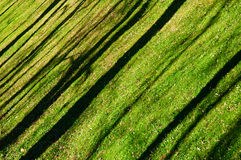Oblique shadows of the trees on the lawn Stock Photos