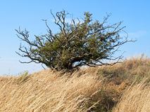 Oblique tree Royalty Free Stock Photography