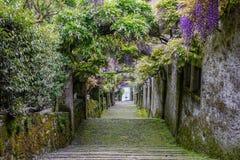 oblivion Un frammento dei giardini dell'isola Madre sul lago Maggiore, Italia fotografie stock