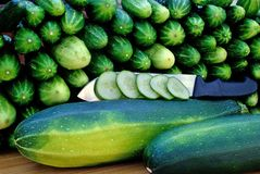 Oblong marrow and green cucumber Stock Photos