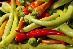 Oblong sweet pepper Stock Image
