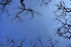 obnaż gałęzie drzew Zdjęcie Royalty Free