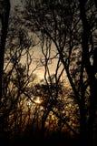obnaż gałęzie drzew Fotografia Stock