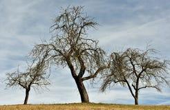 obnaż trzy drzewa Obraz Stock