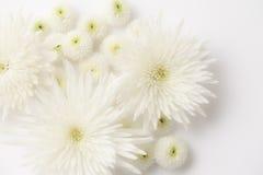 Żałobni kwiaty Zdjęcia Royalty Free