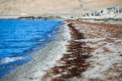 Obok jeziora ptak Obraz Royalty Free