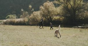 Obok jeziornego taty z jego synem ładnego czas wpólnie bawić się each inny za one odprowadzenie one ponowny husky pies zdjęcie wideo