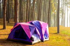 Obozować i namiot pod sosnowym lasem w zmierzchu przy ssanie w żołądku Ung szpilką Obraz Royalty Free