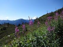 obozowiska chmur góra mt blisko raju dżdżystego leśniczego okrywał stacyjnego odgórnego widok Piekarz i łąki Fotografia Stock
