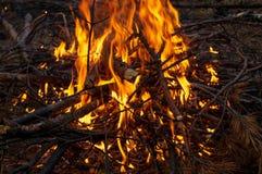 Obozowy ogień w noc lasu paleniu obrazy stock