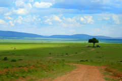 obozowy safari Zdjęcie Stock