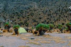 Obozujący przeciw halnemu tłu, góry Kenja park narodowy fotografia stock