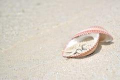 Obrączka Ślubna Shell Wyrzucać na brzeg Zdjęcie Stock