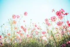 Obrączki ślubne, czerwieni róży kwiat i kierowy kształt na białym notatniku, Zdjęcie Royalty Free