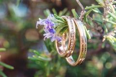 Obrączki ślubne makro- na gałąź Obraz Royalty Free