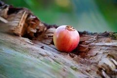 Obrączki ślubne na czerwonym jabłku Zdjęcia Royalty Free