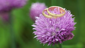 Obrączki ślubne na kwiacie zbiory wideo