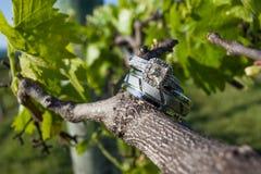 Obrączki ślubne na winorośli Zdjęcie Stock
