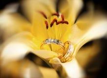 Obrączki ślubne w żółtym kwiacie Obrazy Royalty Free