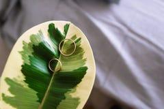 Obrączki ślubne w dużym zielonym liścia tle obraz royalty free