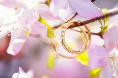 Obrączki ślubne w miękkich części menchii kwiatach Zdjęcie Stock