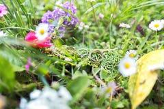 Obrączki ślubne w wildflowers Obrazy Royalty Free