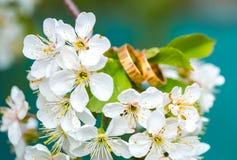 Obrączki ślubnej zbliżenie z czereśniowymi kwiatami obraz royalty free