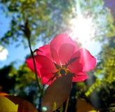 Obraca twój twarz słońce i cienie spadają za wami obrazy stock