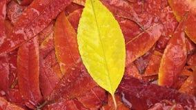 Obracanie tło jesieni ulistnienie, w górę Odgórny widok zdjęcie wideo