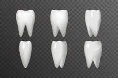 Obracanie zębu animaci ram Realistycznego 3d Stomatology projekta ikony szablonu Transperent tła Stomatologiczny Plakatowy egzami ilustracji