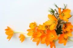 obramiają żółte kwiaty Fotografia Royalty Free
