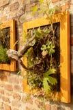 Obramiający korzeń zdjęcie royalty free