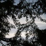 Obramiający niebo naturą Fotografia Stock