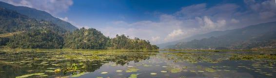 Obrazek łabędź na jeziorze fotografia stock