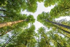Obrazek drzewa w lesie Zdjęcie Stock