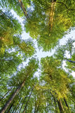 Obrazek drzewa w lesie Fotografia Stock