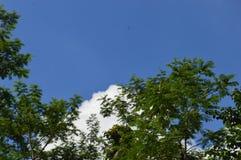 Obrazek drzewo który górował niebo obraz stock