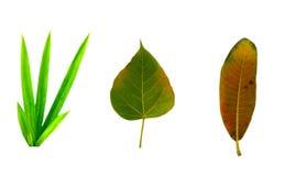 Obrazek jest rżniętymi żółtymi liśćmi które spadają od drzewa fotografia stock